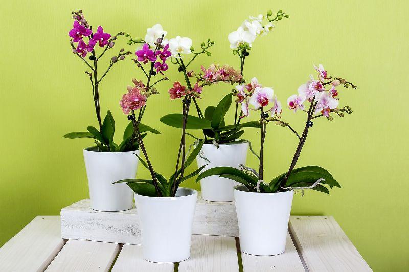 foglie orchidee