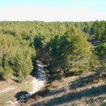 La Foresta di Mercadante a Cassano delle Murge, il polmone della murgia Barese